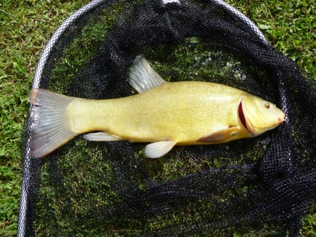 big-Tench-from-smallwater-lake-in-france