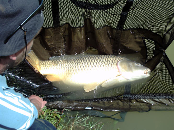 carp-fishing-in-france